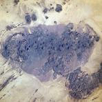 Bayuda Volcanic Field