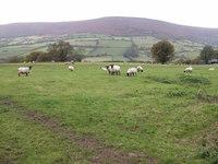 Hatterrall Hill photo