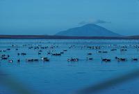Amak Volcano photo