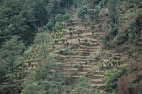 Cardamom Hills photo