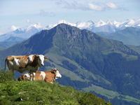 Kitzbüheler Horn photo