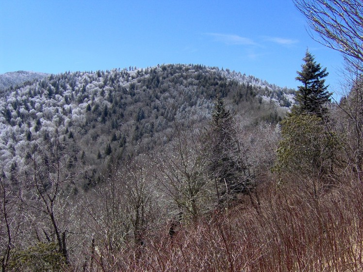 Old Black (Great Smoky Mountains)