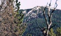 Snow Mountain East photo