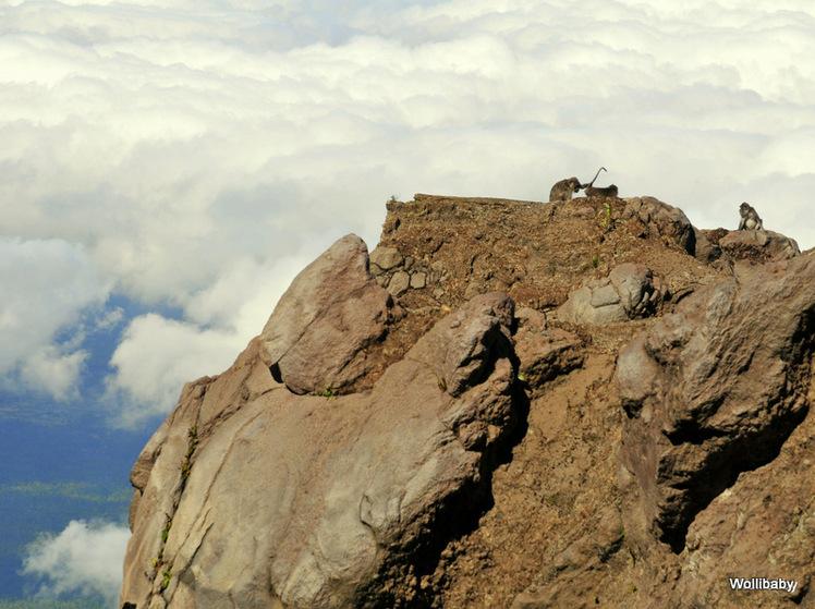 Macaques on Agung, Mount Agung