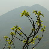 In Bloom ..., Trem - Suva planina