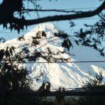 Volcan Villarrica, Villarrica (volcano)